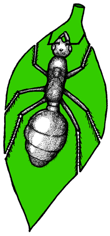 ant&plantImage