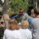 Basic Tree Trimming