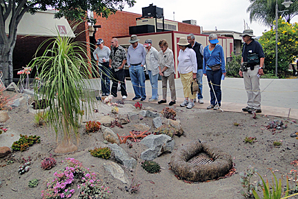 Discover the Plants of Palomar College Walking Tour