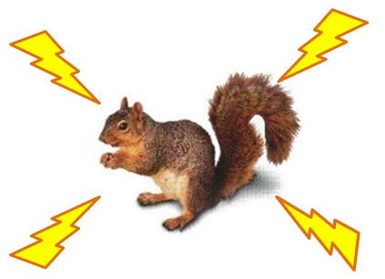 Electric Squirrel