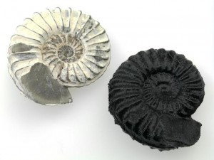 ammonite_and_print
