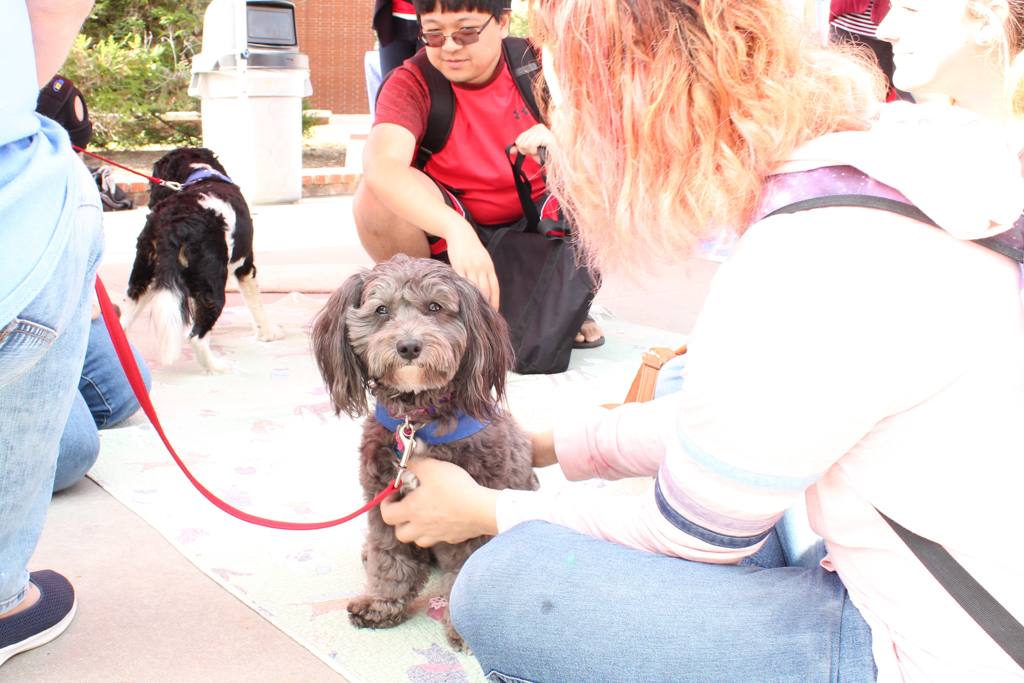 Cho Cho (age 4) holds bearing at the Love on Leash event on Palomar College, Decemeber 4th, 2017. Allen Burton/ The Telescope